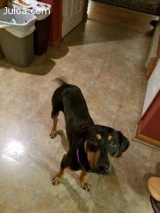 Lost Dog in Mifflintown, PA